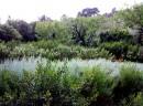 Un jardin de baraquette relooké